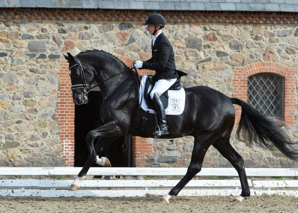 blue-hors-st-schufro-canter