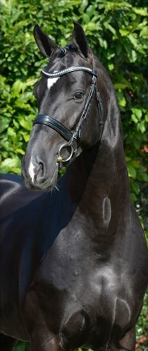 blue-hors-st-schufro-front
