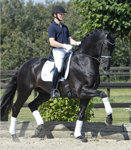 blue-hors-first-choice-trot