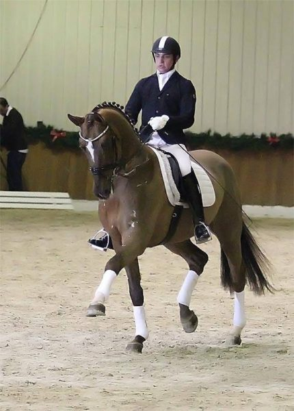 Don frederic global equine sires for Domon frederic