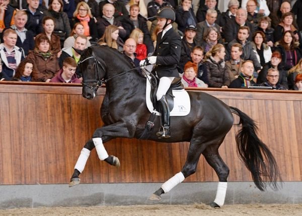 blue-hors-first-choice-canter